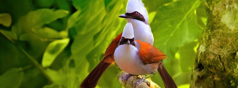 Voyage en Inde - Visite des parcs et des réserves naturelles en Inde - Keoladeo Ghana, Dudhwa, Ranthambhore, Sariska