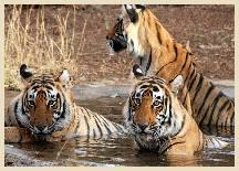 Visite Sariska National Park en Inde
