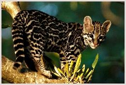 Parc national Panna Inde réserves d'espèces sauvages de l'Inde