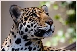 Ranthambore national park, réserve de tigres, panthères, oiseaux