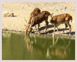Visite du parc national Dudhwa au pied de l'Himalaya népalais, jungle de nombreux tigres et herbivores. Jeep safari