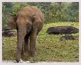 Visite du parc national Jim Corbett, réserve de tigres, léopard, éléphants située dans les contreforts de l'Himalaya