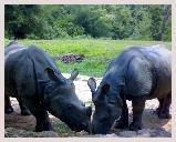Visite du parc Kaziranga au bord de l'Himalaya avec jeep et elephant safari, observation des oiseaux