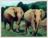 Visite du parc national Muthanga situé près du Kamatak. sanctuaire riche en troupeaux d'éléphants, et tigres, singes, oiseaux, cerfs. Safari éléphant, jeep safari, observation des oiseaux.