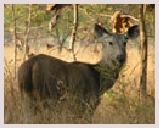 Visite du parc national de Pench situé sur les collines Satpuda. Safari éléphant, observation des oiseaux