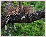 Visite du parc national Rajaji, réserve de tigres et d'éléphants,léopard, située sur les collines de l'Himalaya