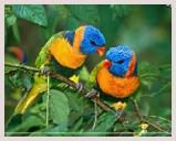 Visite du parc national Ranganathittu Bird Sanctuary situé dans l'état indien du sud de Karnataka, sanctuaire d'oiseaux. Balade bateau, observation des oiseaux