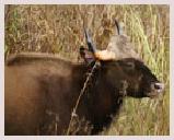 Visite du parc Royal Chitwan au pied de l'Himalaya. Canoë, observation des oiseaux, visite guidée, safari elephant