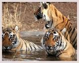 Visite du parc Sariska situé le long du district d'Alwar du Rajasthan. Jeep safari et balade bateau dans le parc