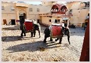 Voyage en Inde, montée à dos d'éléphant au fort Amber, inclu dan votre circuit en Inde